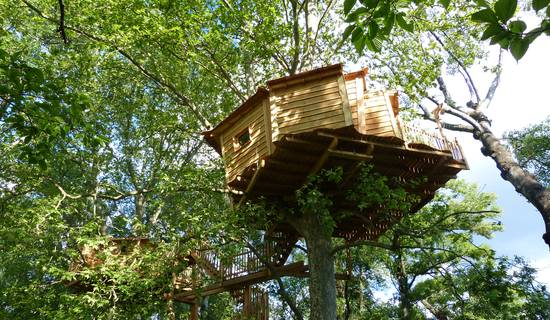 Tree house picture