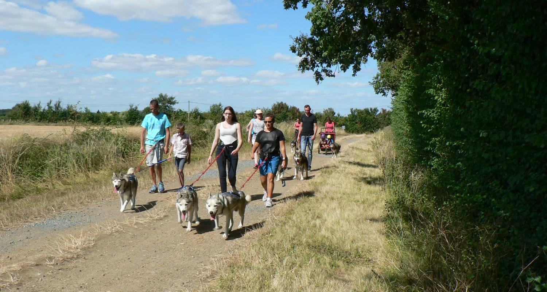Activité: cani-randonnée avec des chiens de traineau nordiques. à doué-la-fontaine (128448)