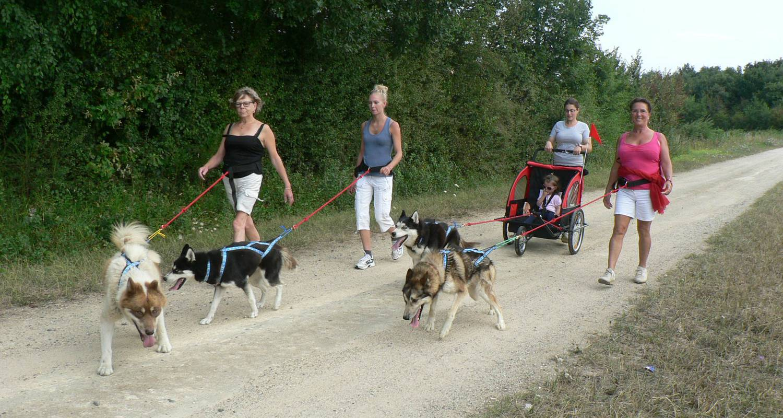 Activité: cani-randonnée avec des chiens de traineau nordiques. en doué-la-fontaine (128447)