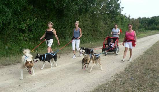 Cani-randonnée avec des chiens de traineau nordiques.