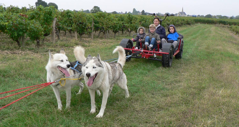 Activité: baptême doggy-kart avec des chiens de traineau nordiques à doué-la-fontaine (128727)