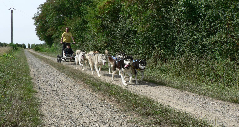 Activité: baptême doggy-kart avec des chiens de traineau nordiques à doué-la-fontaine (128726)