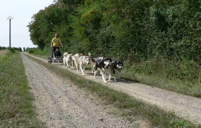 Baptême doggy-kart avec des chiens de traineau nordiques