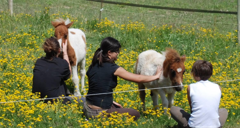 Amueblado: au milieu des chevaux et des poneys en ventavon (128737)