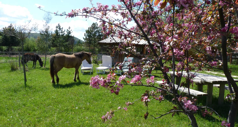 Gîte: au milieu des chevaux et des poneys in ventavon (128733)