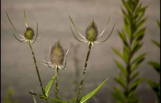 Séjour identification de plantes sauvages du  samedi 09 juin au vendredi 15 juin 2018
