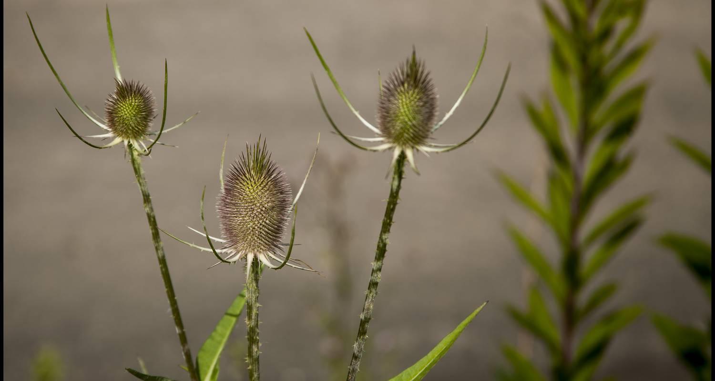 Activity: séjour identification de plantes sauvages (orchidées incluses) du samedi 12 mai au vendredi 18 mai 2018 in saint-saud-lacoussière (128955)