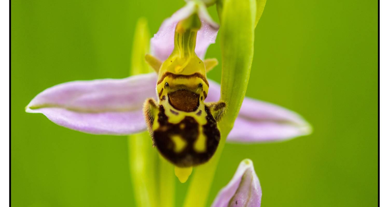 Activity: séjour identification de plantes sauvages (orchidées incluses) du samedi 12 mai au vendredi 18 mai 2018 in saint-saud-lacoussière (128921)