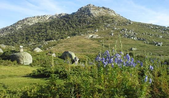 Montagnes & merveilles de l'Alta Rocca: traversée du plateau du Cuscionu et nuitée en cabane