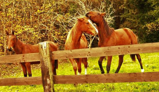 Equitation et balades picture