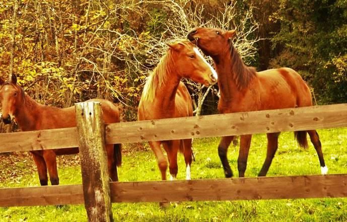 Equitation et balades