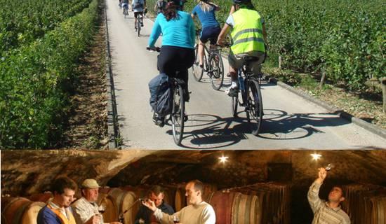 Vélo et vin dans les vignobles