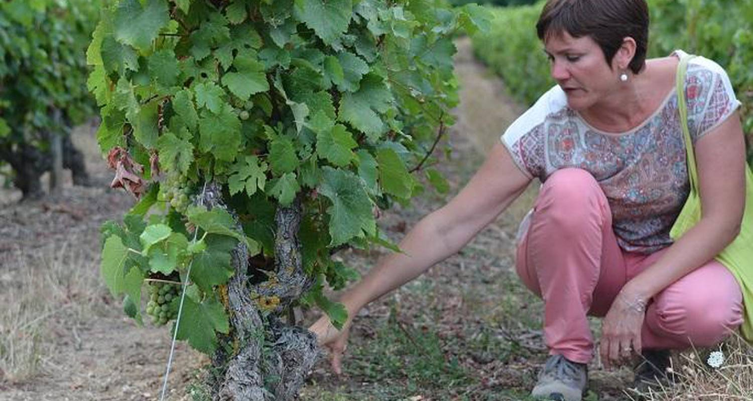 Activity: from vine to wine in chançay (129933)