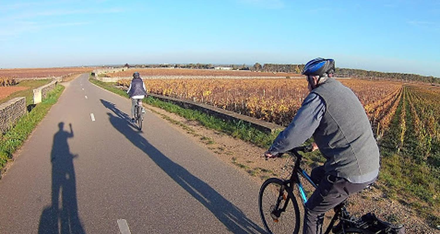 Activity: half day bike and wine tour in beaune (130238)