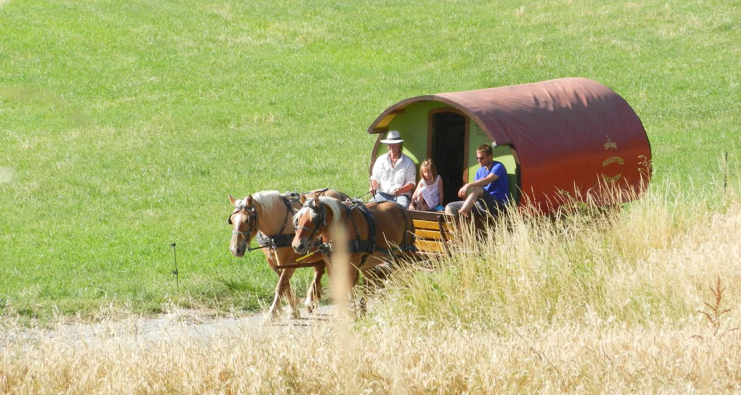 Activity: set off through the drôme countryside on a horse-drawn caravan.  anyone can enjoy our  excursions!  an experienced guide will ensure  a safe ride  in le poët-célard (130290)