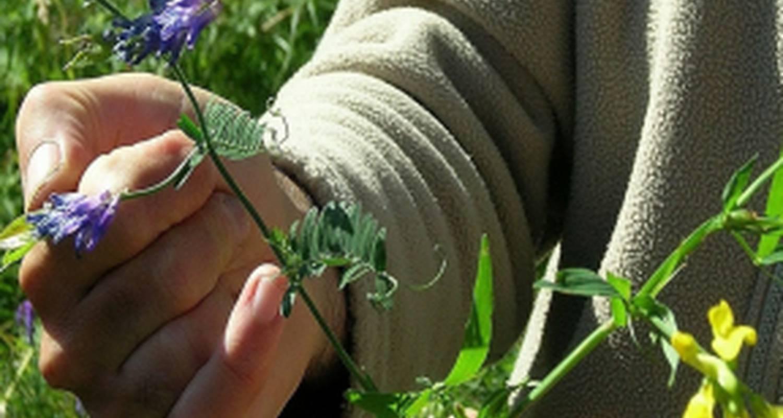 Activité: découvrez la phyto-aromathérapie lors d'un stage en pleine nature à piégros-la-clastre (130722)