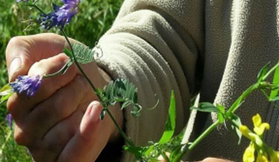 Découvrez la phyto-aromathérapie lors d'un stage en pleine nature photo