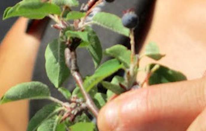 Cueillez et transformez les plantes : de la plante au produit