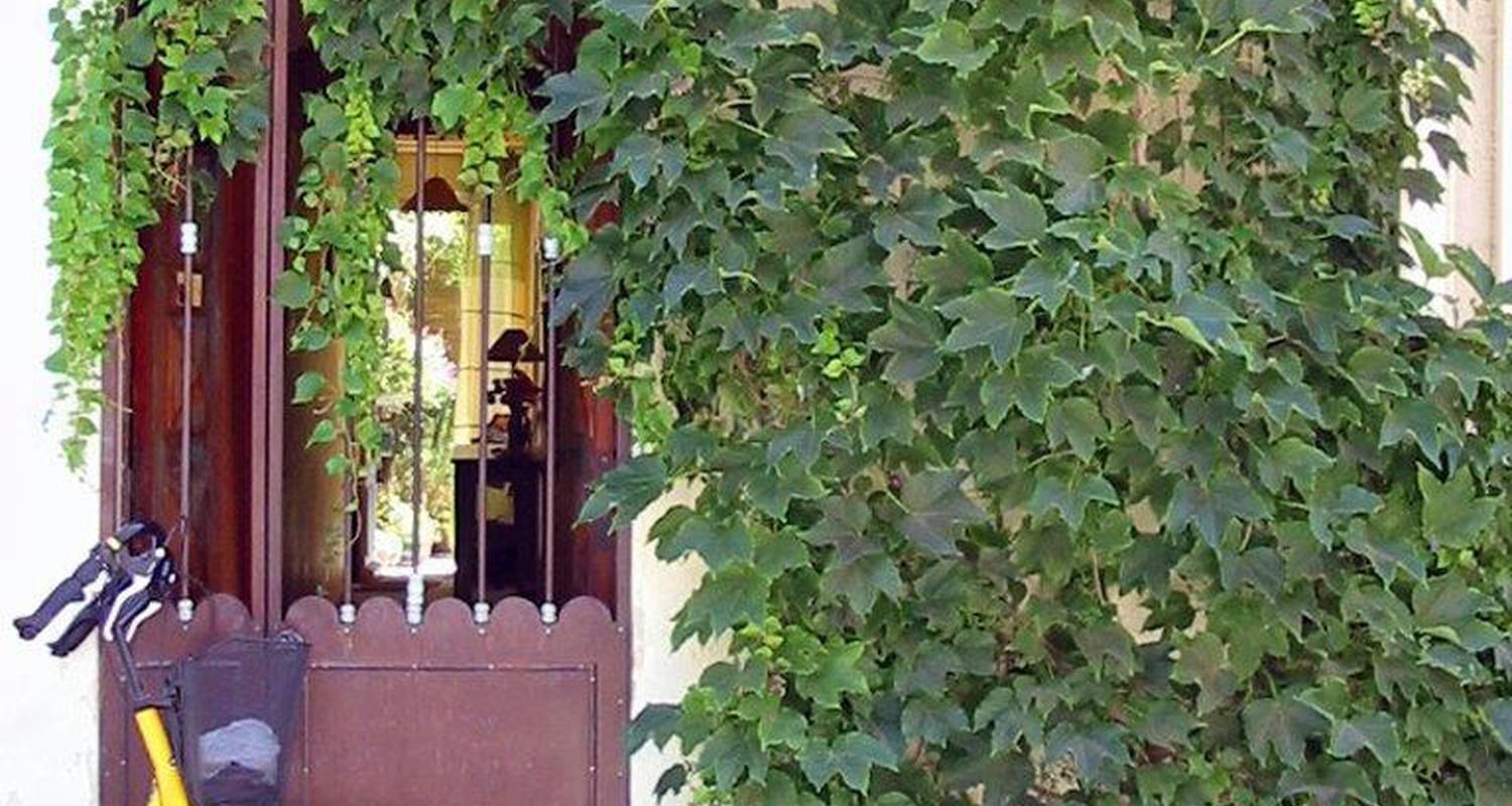 Bed & breakfast: b&b farniente in aigues-mortes (130775)