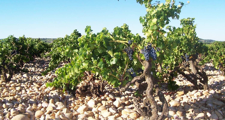 Activité: escapade chez le vigneron  à orange (130984)