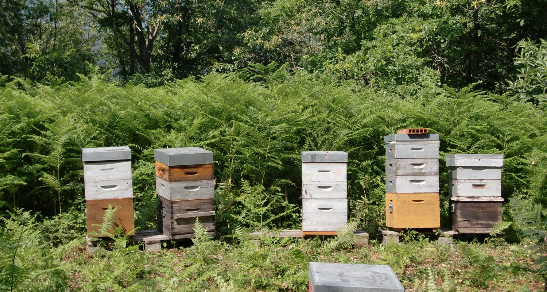 Activité: decouverte de l'apiculture en conques (131381)