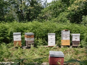 Decouverte de l'apiculture