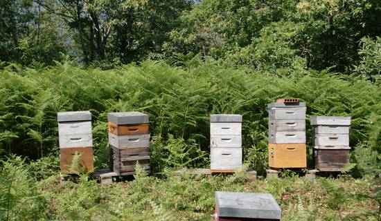 decouverte de l'apiculture