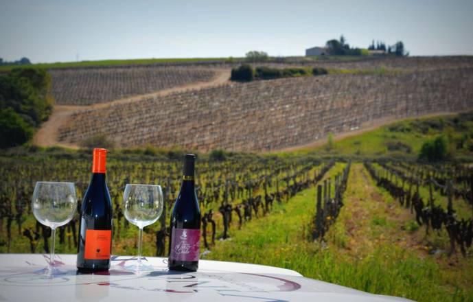 Vigno'vins, découverte du vignoble de Saint Christol en 4x4
