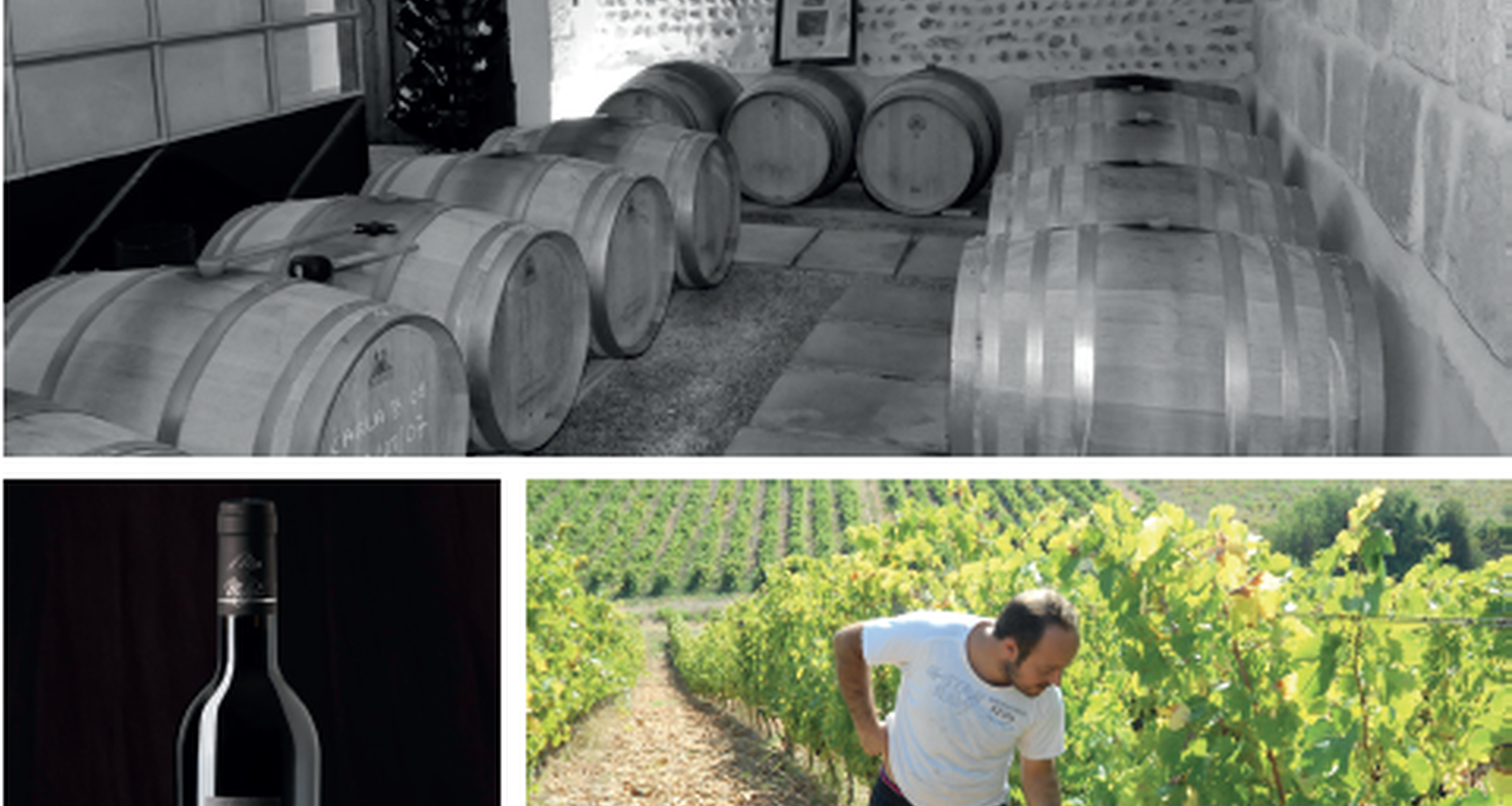Activity:  vigno'vins, discovery of the organic vineyard in 4x4 in saint-laurent-d'aigouze (131766)