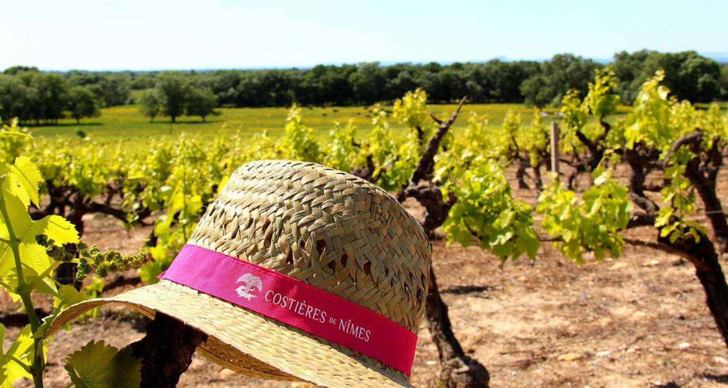 Activity:  vigno'vins, discovery of the organic vineyard in 4x4 in saint-laurent-d'aigouze (131765)