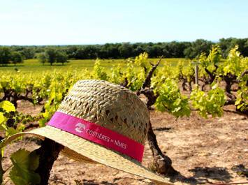Vigno'vins, discovery of the organic vineyard in 4x4