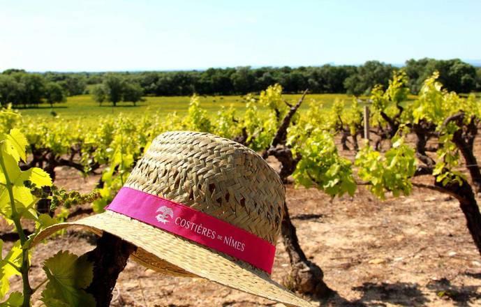 Vigno'vins, découverte de vignobles BIO en 4x4