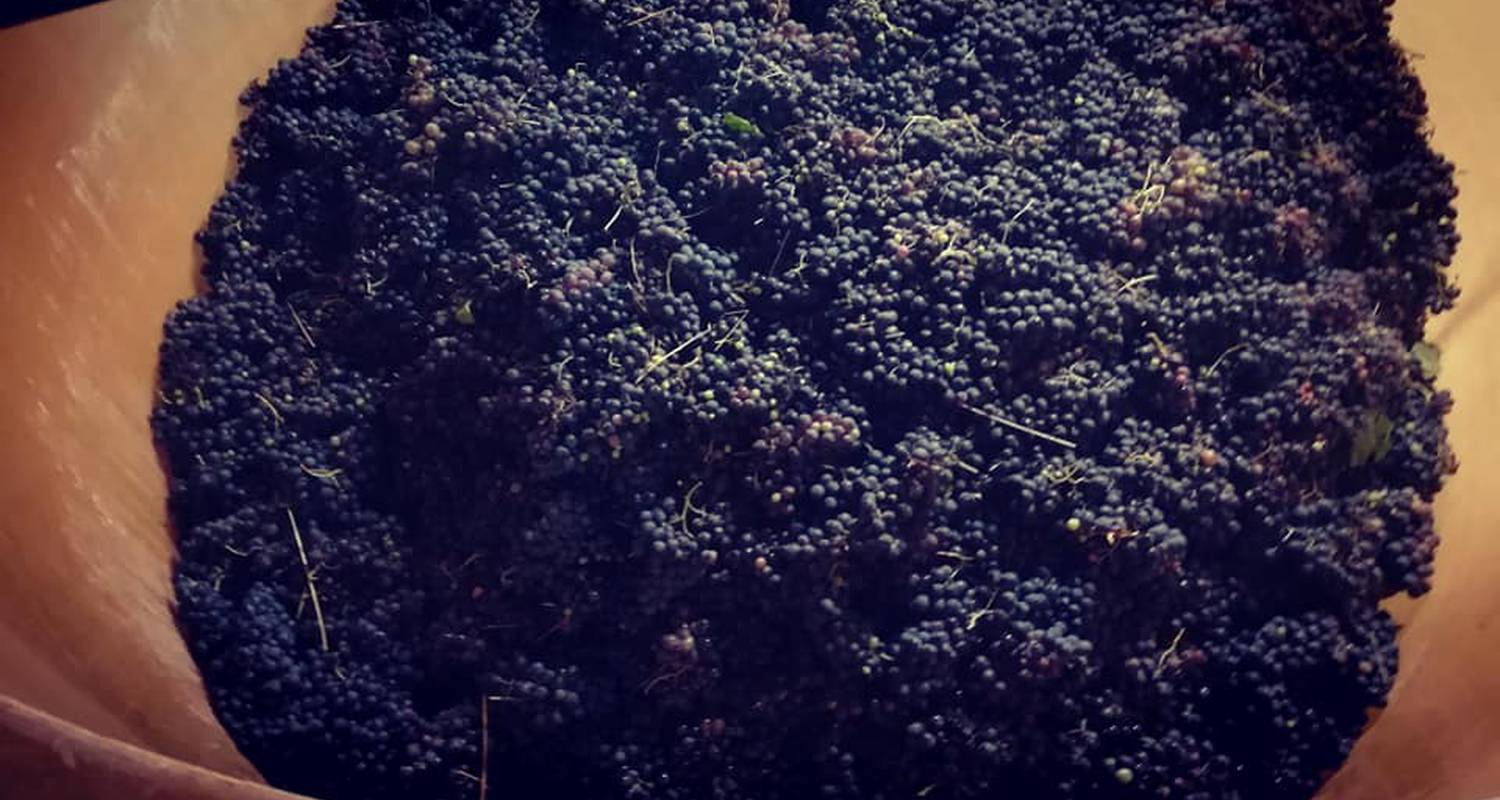Activity:  vigno'vins, discovery of the organic vineyard in 4x4 in saint-laurent-d'aigouze (131776)