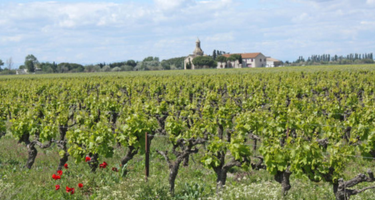 Activity:  vigno'vins, discovery of the organic vineyard in 4x4 in saint-laurent-d'aigouze (131775)