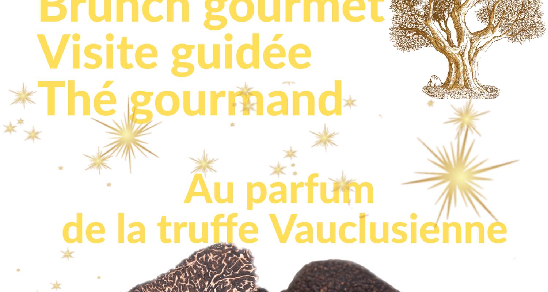 Activity: au parfum de la truffe vauclusienne : journée découverte de la truffe in fontaine-de-vaucluse (132162)