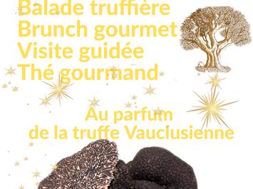 Au parfum de la truffe vauclusienne : journée découverte de la truffe