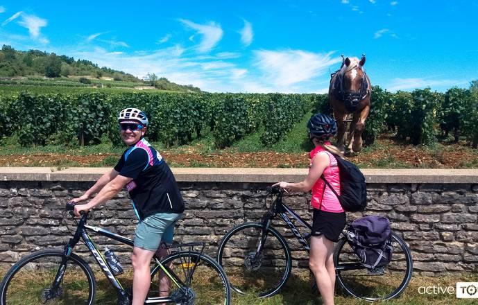 Location de vélo à Dijon